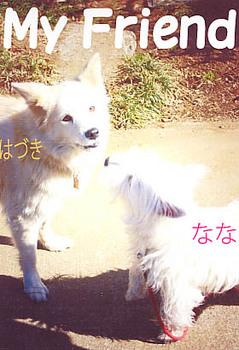 はずき2008.12.20.jpg